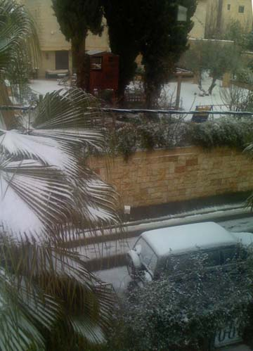 A palm tree with snow
